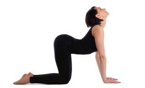 cat-yoga-pose
