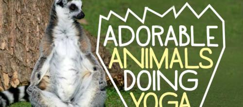 Adorable Animals Doing Yoga