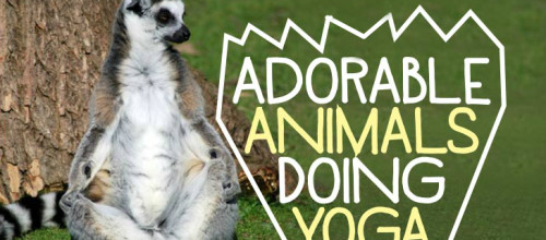 Adorable Animals Doing Yoga